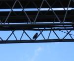 BirdsPipes5395