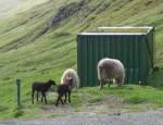 LambsBrown6888
