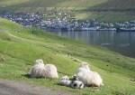 LambsTown6878