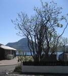 Trees7011