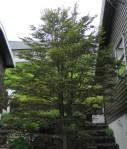 TreesJun7107