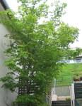 TreesJun7108