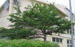 TreesJun7109