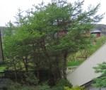TreesJun7110