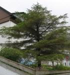 TreesJun7115