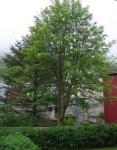 TreesJun7123