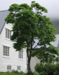 TreesJun7127