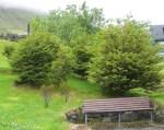 TreesJun7132