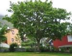 TreesJun7142
