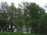 TreesJun7145