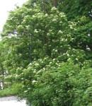 TreesJun7149
