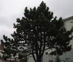 TreesJun7156
