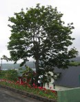 TreesJun7160