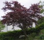 TreesJun7163