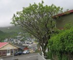 TreesJun7170