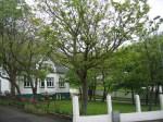 TreesJun7188