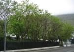 TreesJun7192