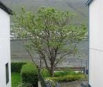 TreesJun7207