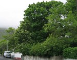 TreesJune7150