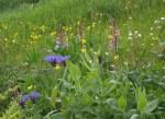 Weeds7524