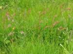 WeedsGrasses7616