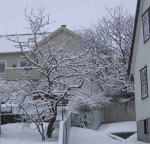 Trees8764