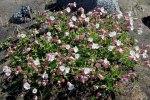 Flowers0602