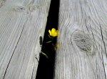 Flowers0809
