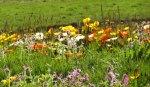 Flowers1118