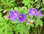 Flowers1471