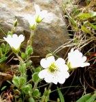 Flowers1484