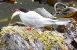 Birds2512