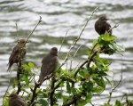 Birds2628
