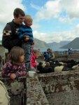 Children enjoy the sheep shearing