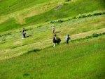 Family harvesting hay.