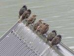 Birds on my boathouse