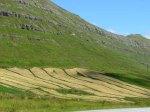 Mowed hay fields
